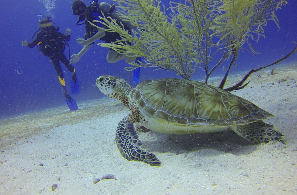 sukeldujad-mehhikos